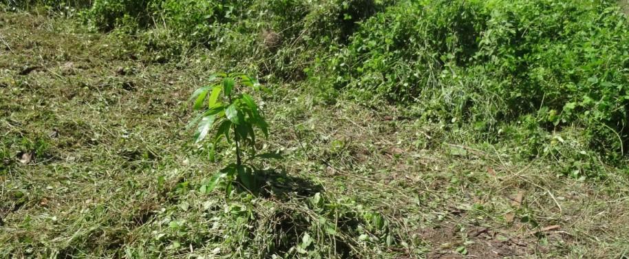 Premier arbre planté pour célébrer le démarrage des travaux