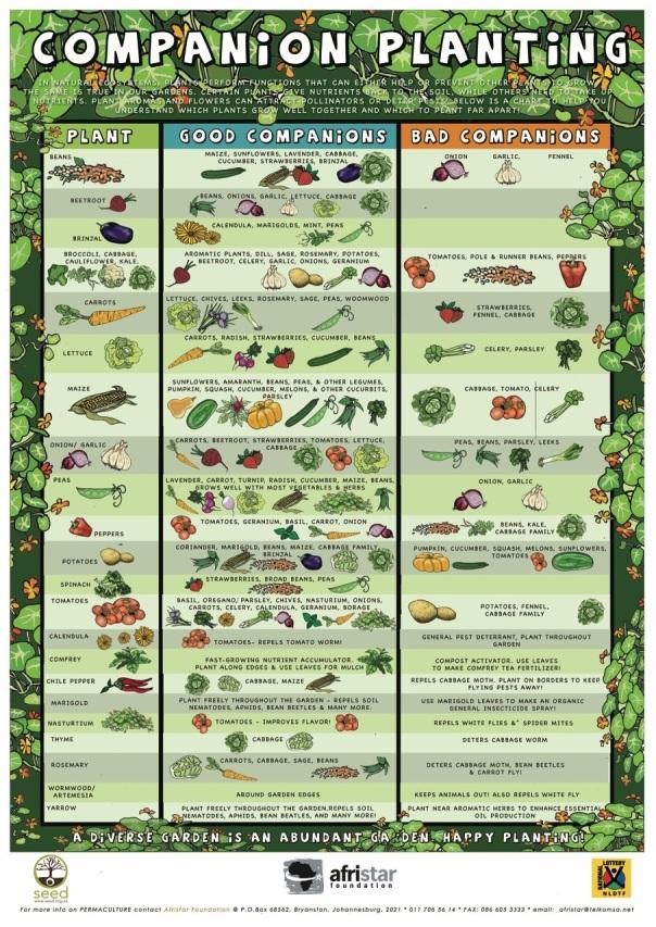 plantes qui s'aiment